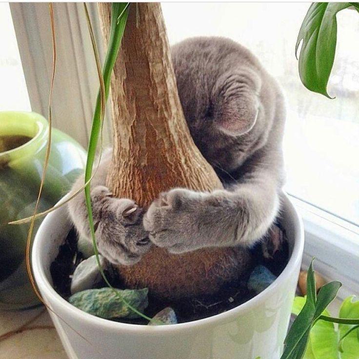J'suis puni par mon humain, j'ai fait pipi dans ses plantes !