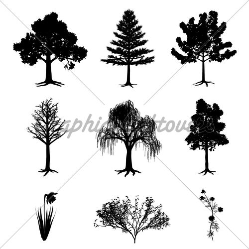 Collection Of 6 Trees, Narcissus, Chamomile And...