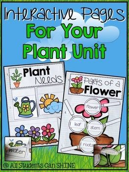 Interactive Notebook Pages For Your Plant Unit - FREEBIE!