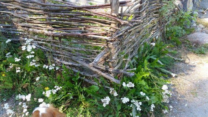 Old fence, from The historical Viking island Birka. #björkön #birka