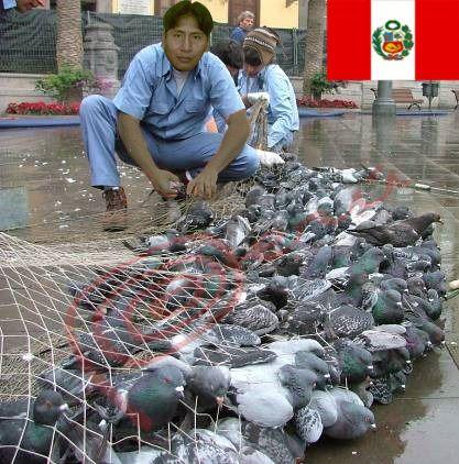 Peinados peruanos, peruanos promedio, peruanos de barrio, peruanos cazan palomas, gastronomia peruana.