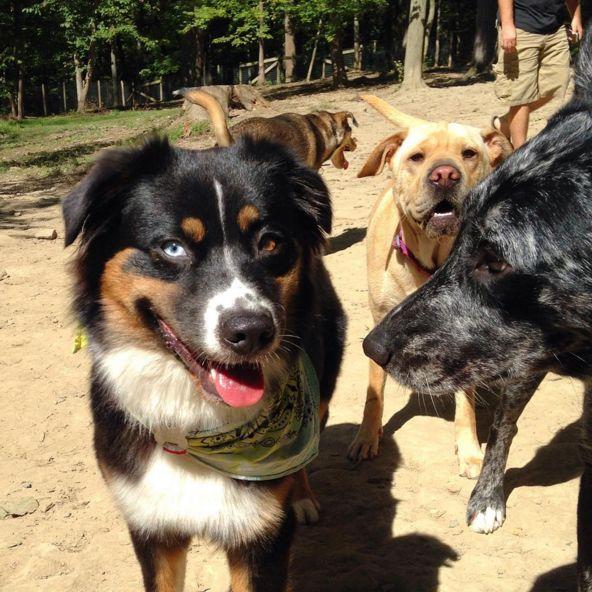 Socializing at Krepps Dog Park - Morgantown, WV - Angus Off-Leash #dogs #puppies #cutedogs #dogparks #morgantown #westvirginia #angusoffleash