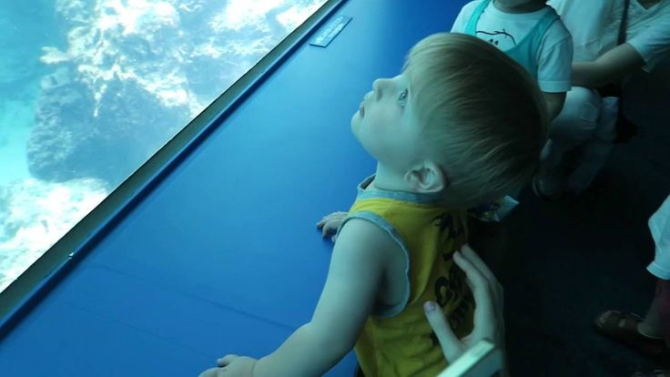Япония. Остров Окинава. Океанариум.Самый большой аквариум в мире!