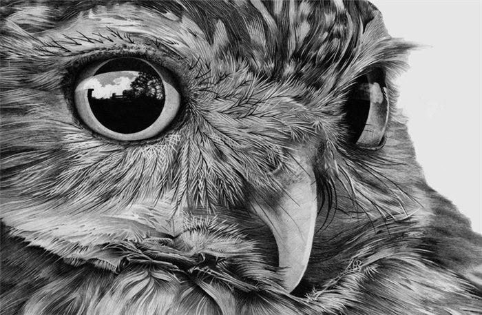 Beautiful pencil drawing of an owl.