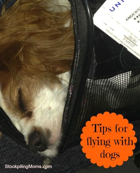Tips for flying on airplanes with dogs. A must read if you are a pet owner.