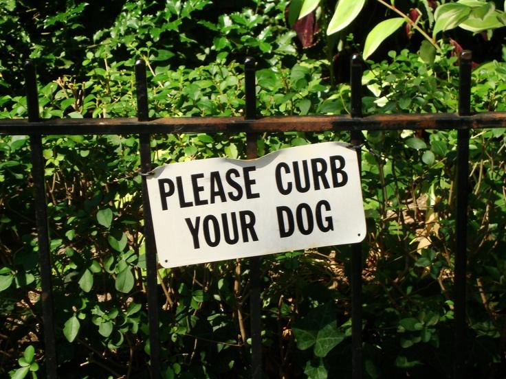 Dog rules...