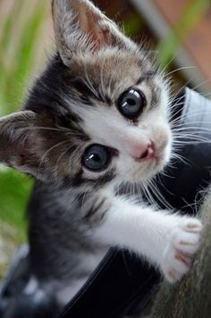 Awwwww, just look at those eyes! See more at - Catsincare.com