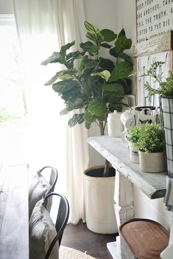 Faux Fiddle Fig