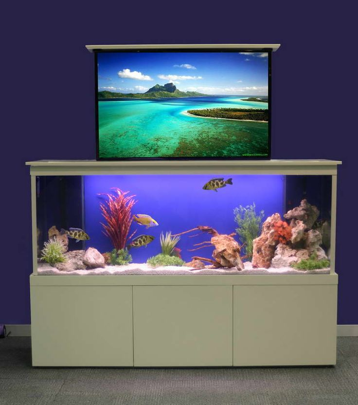 Aquarium Décor Ideas For Walls With Purple ~ Http://modtopiastudio.com/