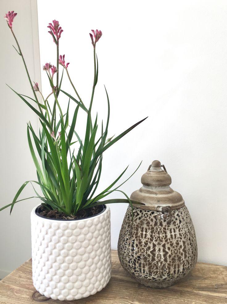 8 best Magnolia Lane Pots & Planters images on Pinterest | Aquatic ...