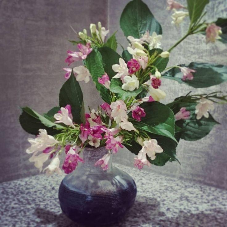 我が家のハコネウツギももうこれで終わりです。 強剪定して、また来年!�� #flower #flowers #flowerstagram  #flowerslovers  #ikebana  #instaflowers  #生け花 #いけばな#華道 #japan #花束 #beauty#bouquet #nature #naturelovers #flowerarrangement #ウツギ#ハコネウツギ http://gelinshop.com/ipost/1522260368113948185/?code=BUgJ71RFlYZ