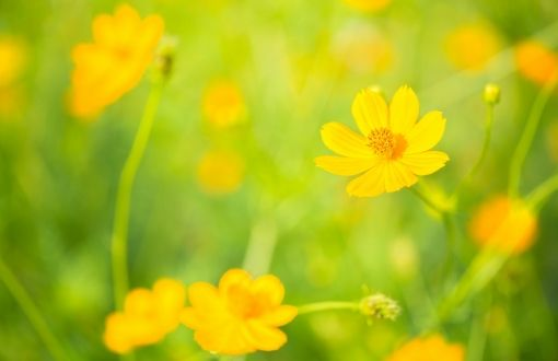 Yellow flowers wallpapers | Wallpaper HD