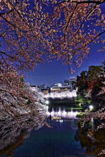 SAKURA(Cherry blossom)/ Kitanomaru Garden, Chiyoda, Tokyo(HDR) on Flickr.