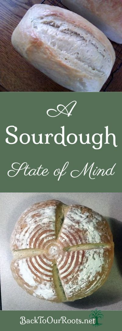 All the questions about sourdough have me in a sourdough state of mind! Learn why I started my own sourdough starter and what I did with it next.