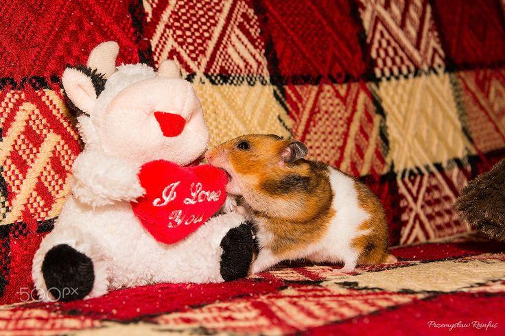 Hamster attack! - null