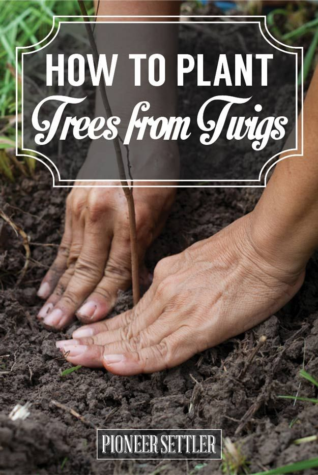 Planting Trees From Twigs | Save Money & Watch Your Garden Grow! | Gardening & Homesteading Tips And Ideas by Pioneer Settler at http://pioneersettler.com/planting-trees-from-twigs/