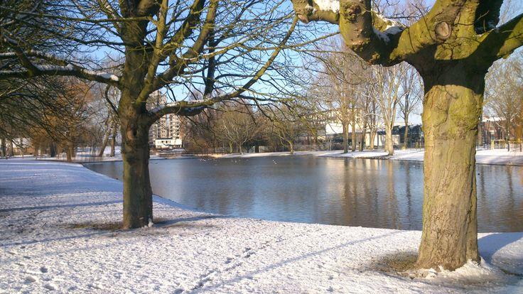 Vijver 'Waal' tussen de Kromme zandweg, Boergoensevliet en het speelterrein aan de Huismanstraat. 28-12-2014