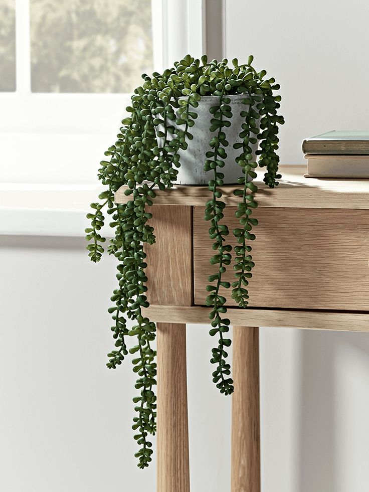 Displayed in a faux concrete pot, our fabulously realistic faux string of pearls plant will add a touch of botanical style to your living space. Use to soften an industrial interior, or display with other faux plants and flowers to add freshness.