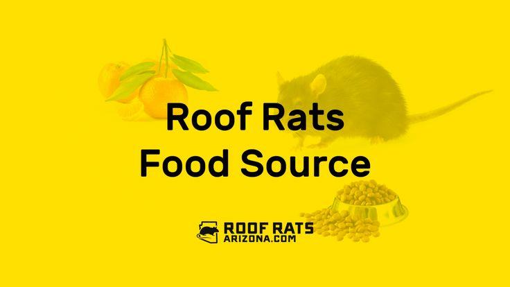 Roof Rat Food Source