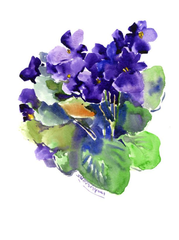 Violets Deep Violet Purple Saintpaulia Original Watercolor