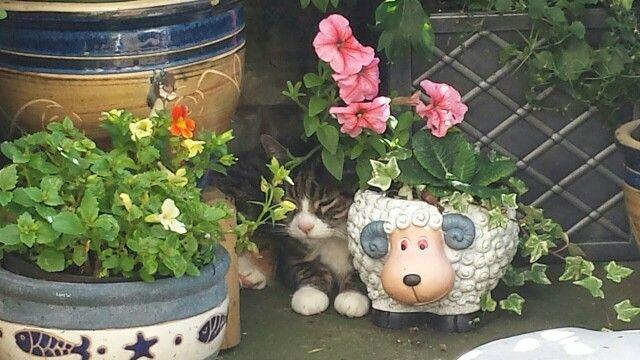 Herbie hiding