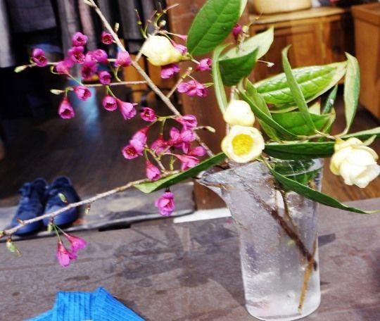 金花茶と寒緋桜