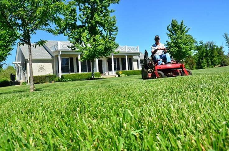 5 Steps to the Lush, Green Lawn of Your Dreams! - Rocky's Ace Hardware Store