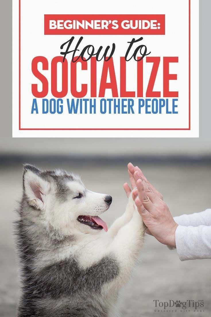 How To Socialize A Dog With Humans A Beginner S Guide Dog