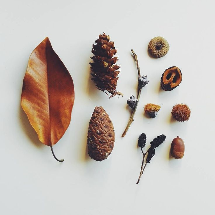 "35 Gostos, 3 Comentários - Adriana Oliveira (@mundoflo) no Instagram: ""Autumn <3 #fall #autumn #stillife #natureobjects #foundinnature #seedpods #collections #outono…"""