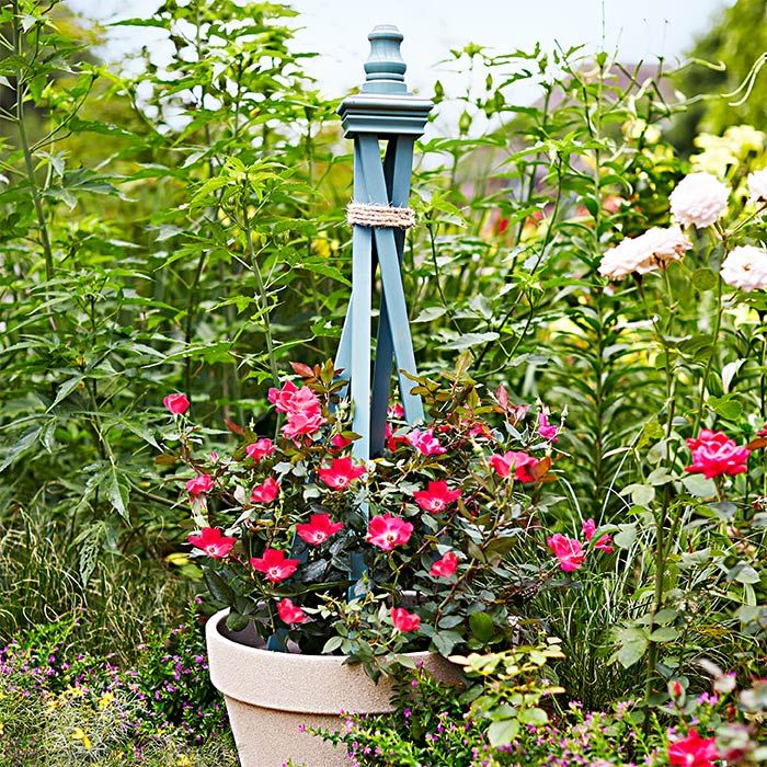 Give climbing plants in containers their own trellis that s just the right size for a portable