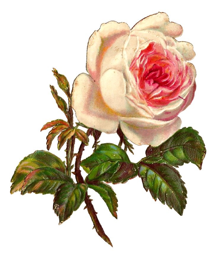 digital rose clip art: