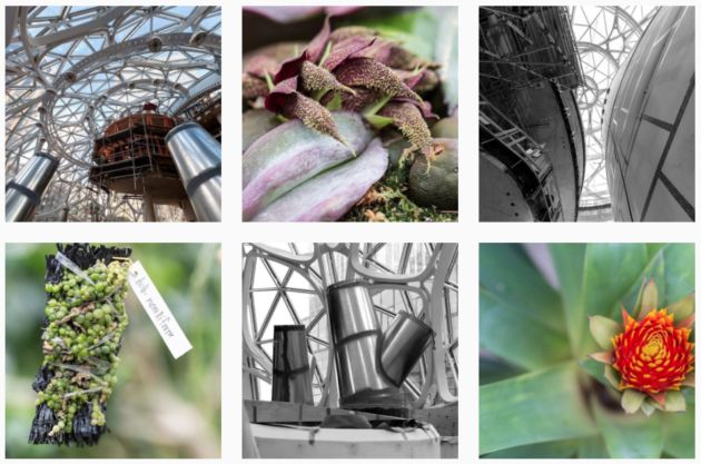 Inside Amazons Spheres: Official Instagram account launches to chronicle plant life and views