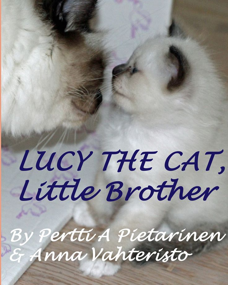 Book Lucy The Cat: Little Brother Cover
