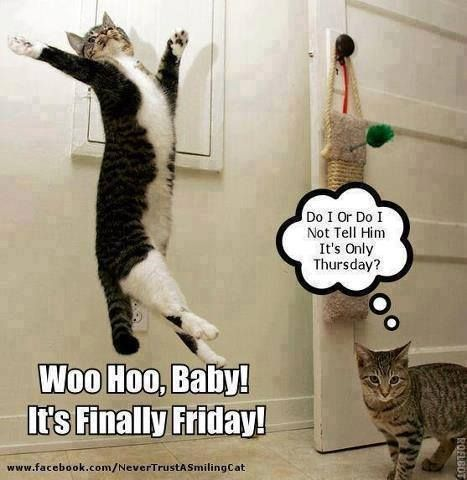 The Cat Is Confused It S Thursday Not Friday Humor