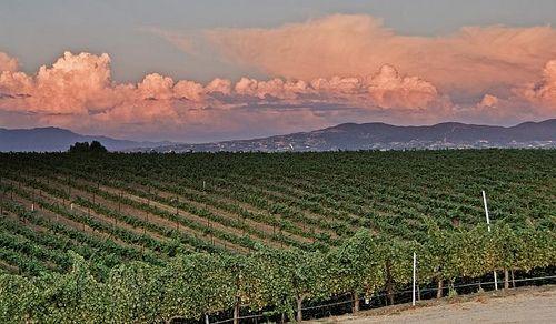 Temecula Wine Vineyards - #California Wine Country #Vacations: http://www.thewondermap.com/california-wine-country-vacations/