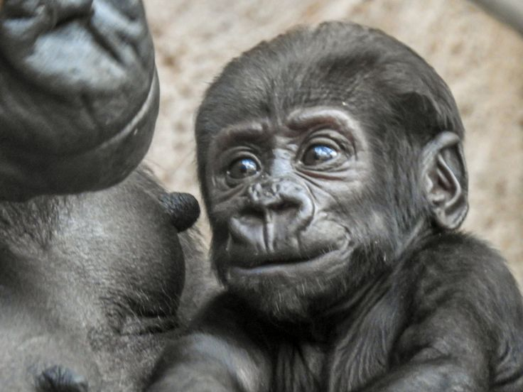 Look - 2 months old baby in Prague ZOO