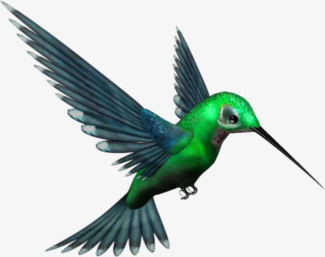 Green Hummingbird Decorative Patterns Bird Hummingbird Bird Wall Art