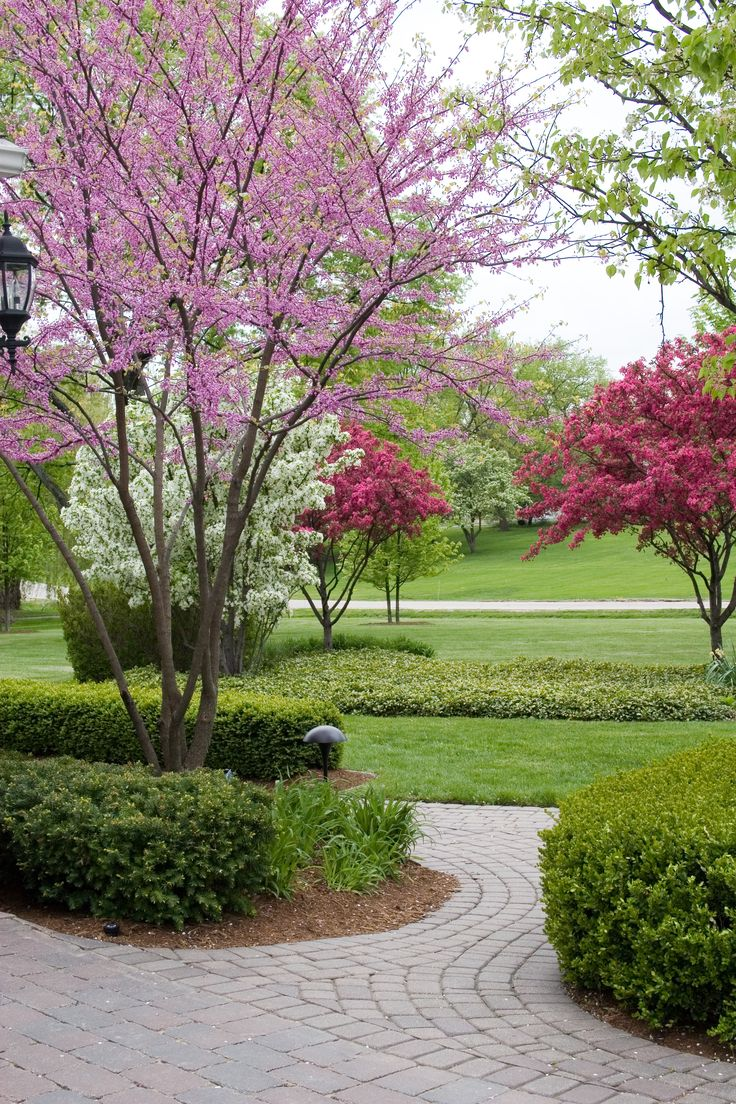 117 best images about plants and trees on pinterest for Flowering dwarf trees for landscaping