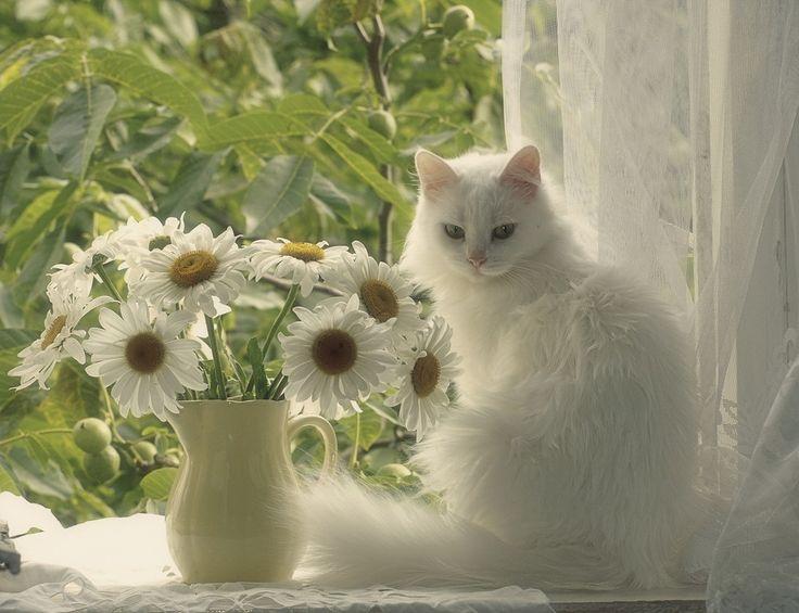 природе картинка красивой белой кошки в цветах пикниках наших
