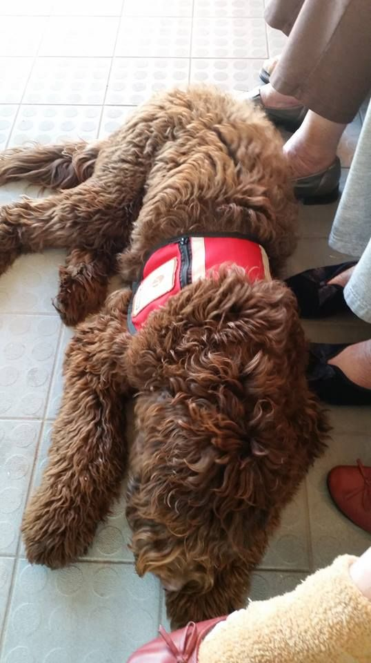 Diesel - Facility Dog - Aged Care Home - Foot warmer