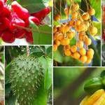 21 Amazing exotické ovoce jste nevěděli, ale měla by