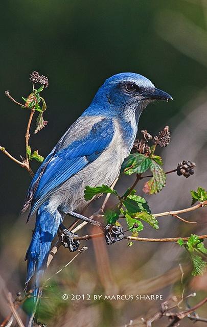 13 best Backyard Birds of East Central Florida images on ...