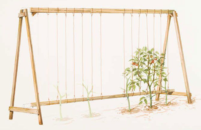 подвязка помидоров к арматуре - Поиск в Google