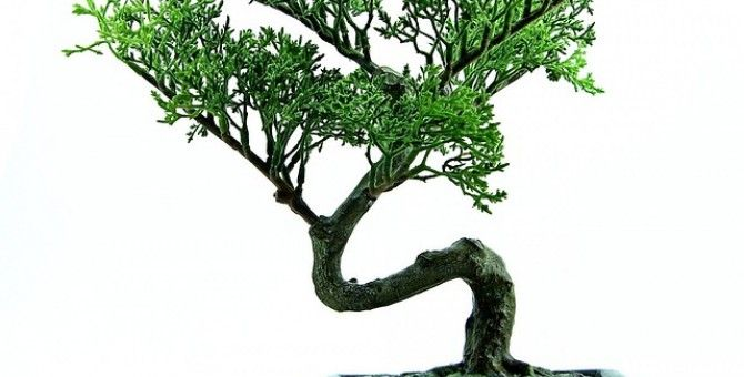 Shaping Your Bonsai - Wiring and Anchoring Techniques