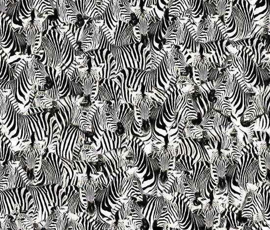 zebras for carcinoid cancer awareness