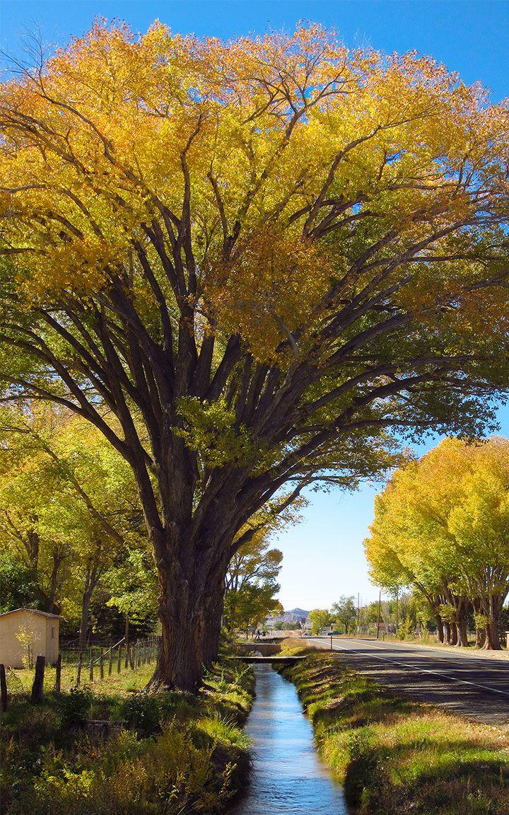 59 Best Wayne County Ut Images On Pinterest Torrey Utah