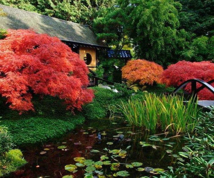 Les 795 meilleures images propos de jardin d 39 ornement for Plantes ornement jardin