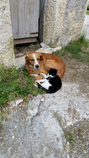 Gatto e cane amici inseparabili dell'Agriturismo Il Portone Abbateggio