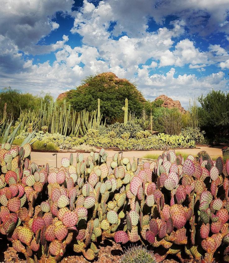 Phoenix, Arizona Travel Guide. Desert Botanical GardenBotanical ...