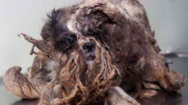 A Passer-by Thought This Was A Pile Of Trash. I've Never Seen A More Shocking Transformation. -
